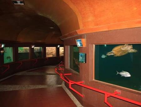 Turtle Museum Mazunte Sea Turtle Museum Mazunte