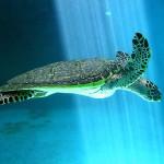 Sea turtle museum Mazunte Oaxaca Mexico 2