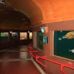 Sea turtle museum Mazunte Oaxaca Mexico 4