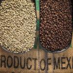 Nuevo Mundo Coffee Roaster Oaxaca 3