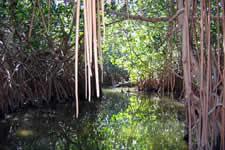 Chacahua lagoon - Puerto Escondido, Oaxaca
