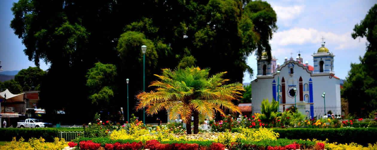 Santa Maria El Tule Oaxaca Mexico